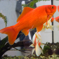 Did you know the average human attention span is now shorter than a goldfish's?